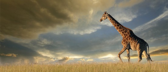 Impaired cardiovascular response to standing in chronic fatigue syndrome