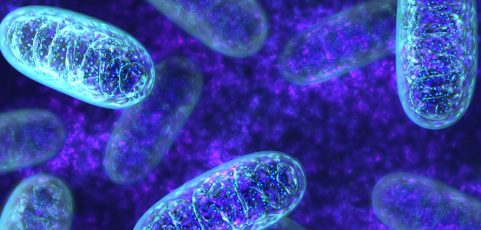 Is mitochondrial function abnormal?