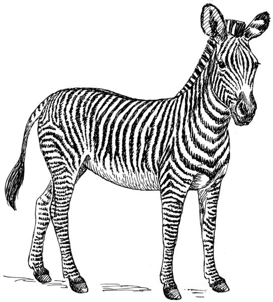 Lessons in herding zebras