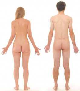 800px-Posterior_view