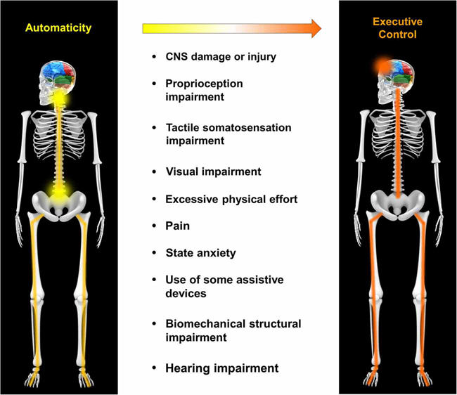 Mechanistic factors that compromise automaticity of walking. From Automaticity of walking. Clark DJ. Front. Hum Neurosci, 05 May 2015.
