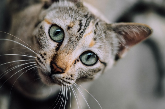 A cat watching the space (courtesy of pexels.com)