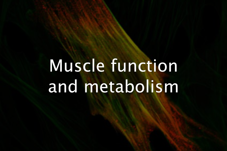 Muscle function and metabolism